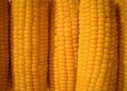 corn-823446__180