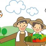 貸し農園での、初めてのダイコン・トウモロコシの植え付け方法