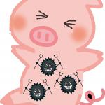 豚コレラの豚肉を食べると人に感染するのか?豚コレラ自体は人に感染するのか?