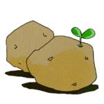じゃがいもの植え付けに石灰(苦土石灰・有機石灰・消石灰等)は必要か?その理由