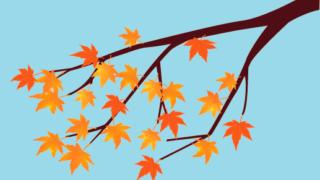 紅葉の時期、とても気になる紅葉(もみじ)と楓(かえで)の違いと語源を解説!